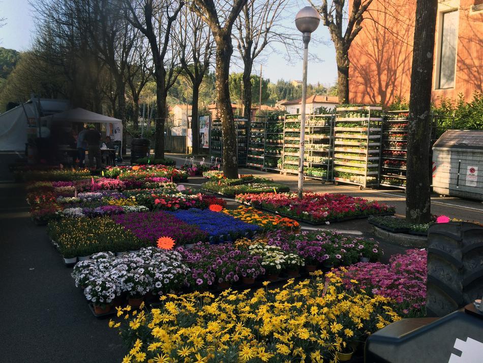 Fornitura di fiori e piantine per ortolani