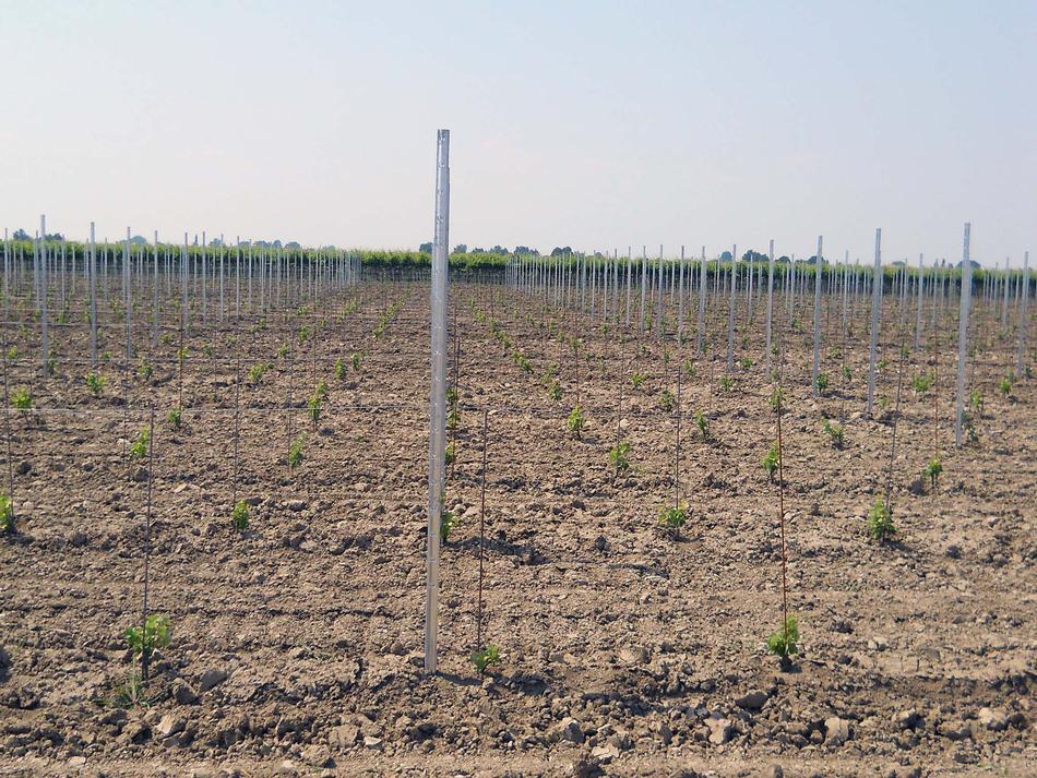 Allineamento trasversale dei pali piantati con sistema GPS